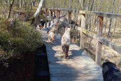 Holzsteg und glückliche Hunde.