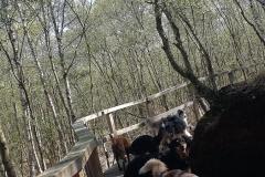 Dann ging es weiter auf dem Holzsteg.